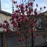 職場に花が・・・ vol.2