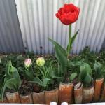 職場に花が・・・ vol.4